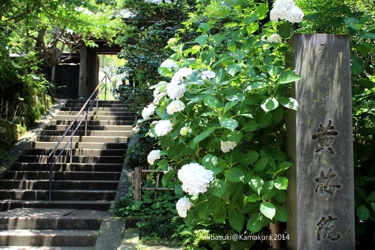 20140616_Kamakura-27_圓覺寺_1.JPG
