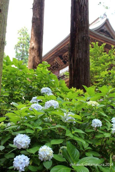 20140616_Kamakura-32_圓覺寺_1.JPG