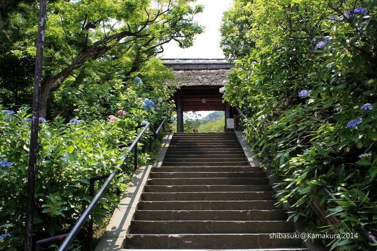 20140616_Kamakura-40_東慶寺_1.JPG
