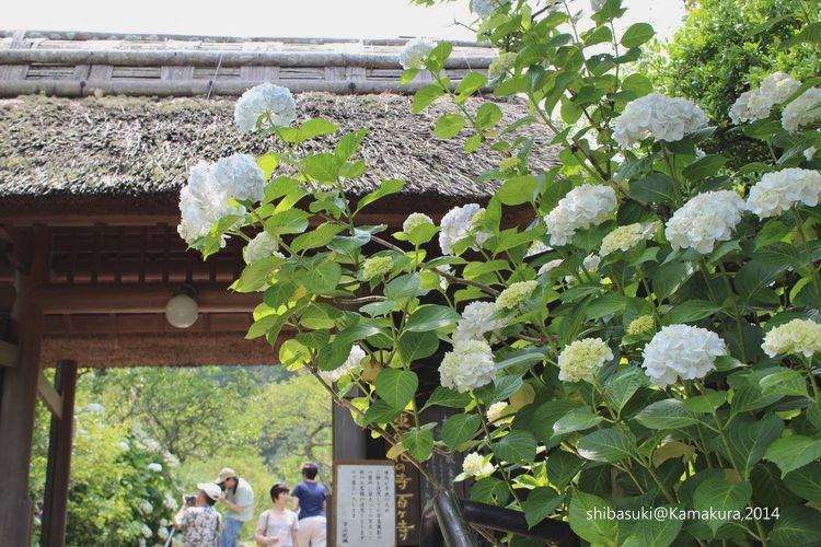 20140616_Kamakura-50_東慶寺_1.JPG