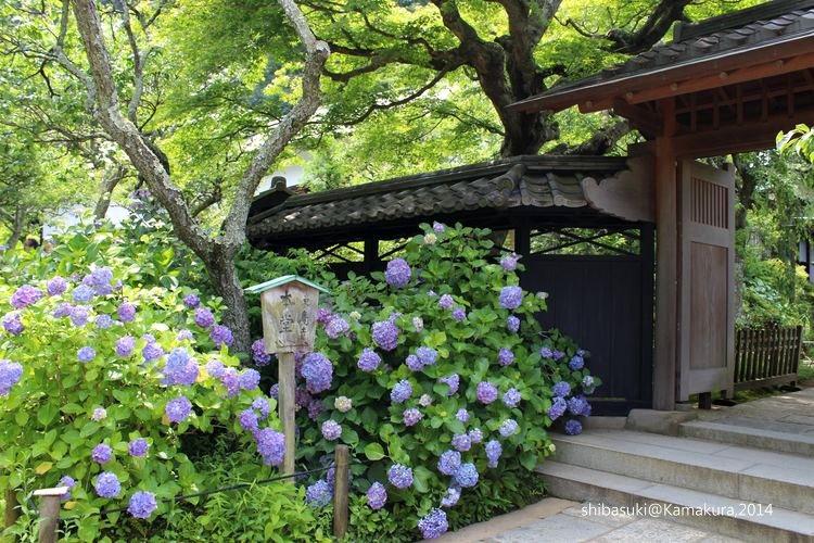 20140616_Kamakura-52_東慶寺_1.JPG
