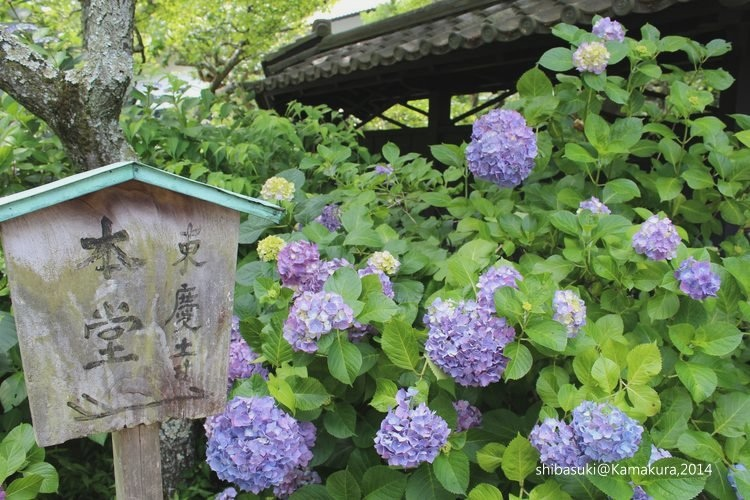 20140616_Kamakura-53_東慶寺_1.JPG