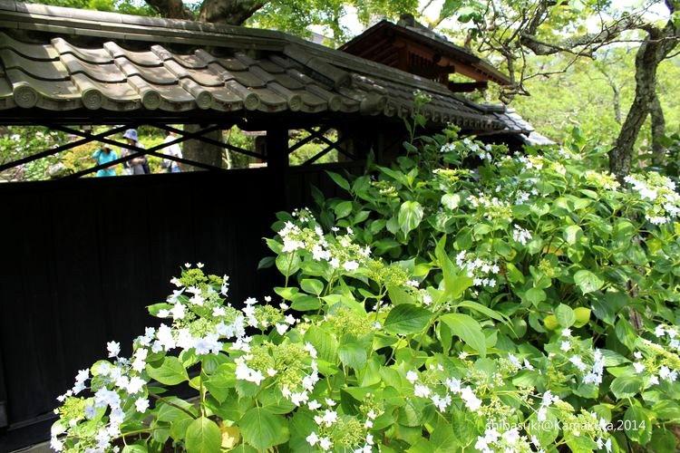 20140616_Kamakura-55_東慶寺_1.JPG