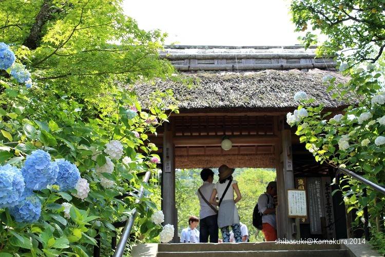 20140616_Kamakura-63_東慶寺_1.JPG