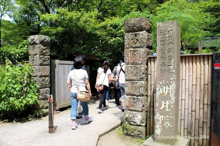 20140616_Kamakura-64_明月院_1.JPG