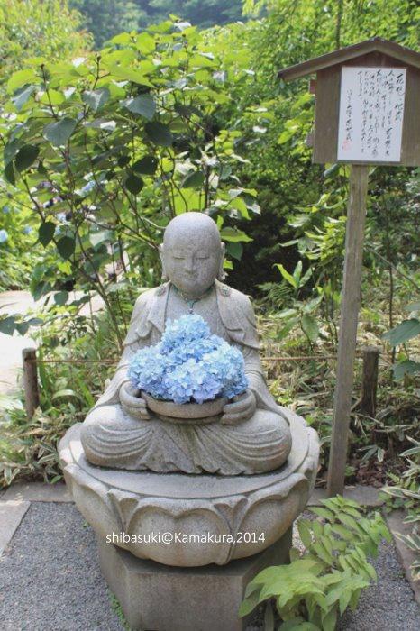 20140616_Kamakura-111_明月院_1.JPG