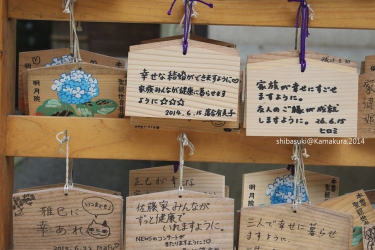 20140616_Kamakura-113_明月院_1.JPG