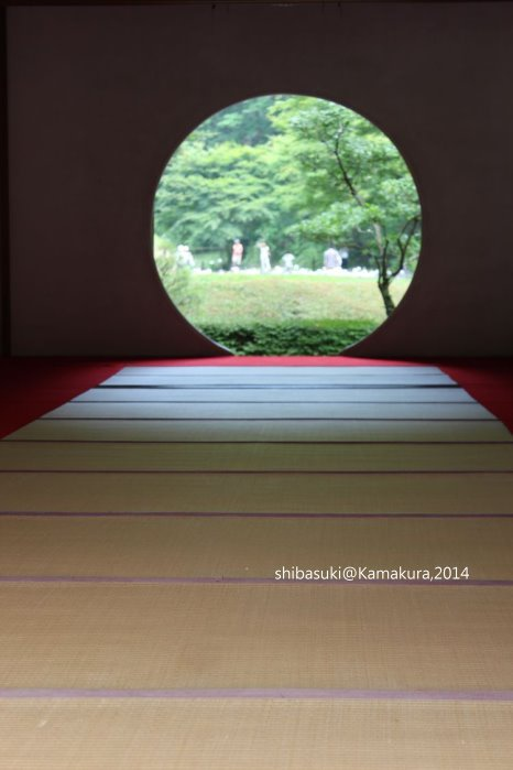 20140616_Kamakura-119_明月院_1.JPG