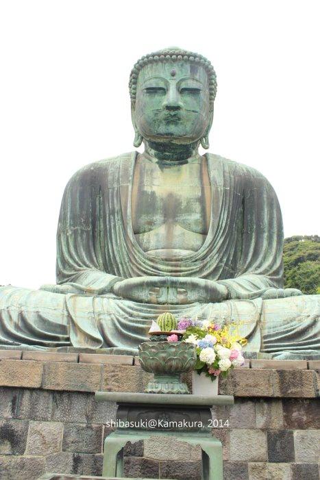 20140617_Kamakura-55_高德院大佛_1