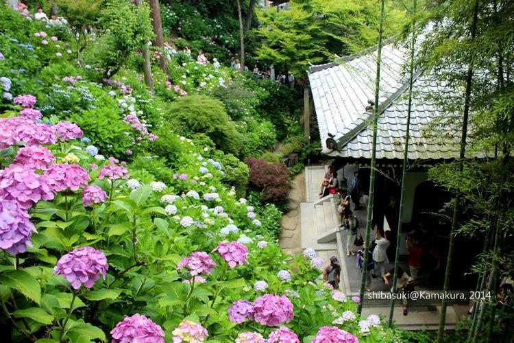 20140617_Kamakura-119_長谷寺_1