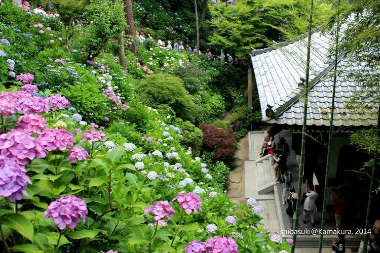 20140617_Kamakura-120_長谷寺_1