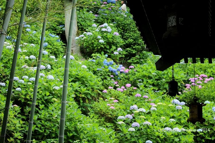 20140617_Kamakura-134_長谷寺_1