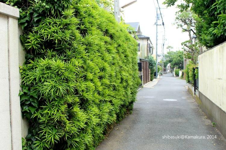 20140617_Kamakura-138_1