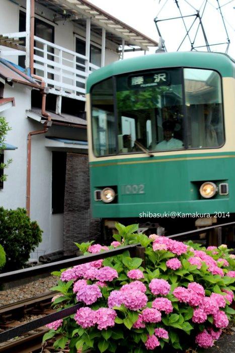 20140617_Kamakura-139_1