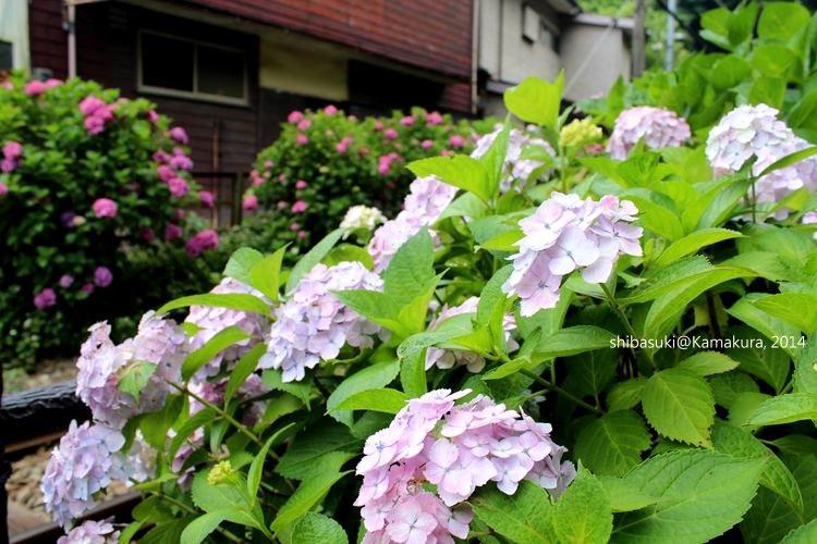 20140617_Kamakura-175_御靈神社_1