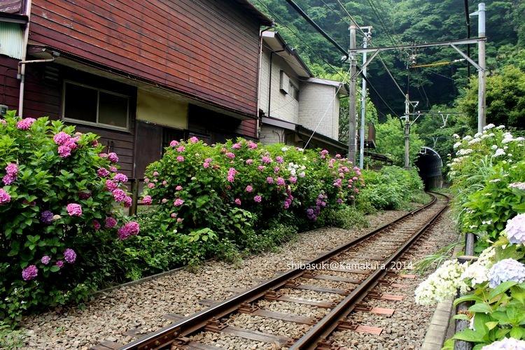 20140617_Kamakura-184_御靈神社_1