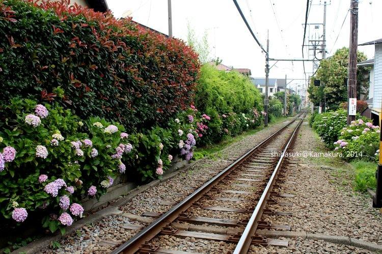 20140617_Kamakura-185_御靈神社_1