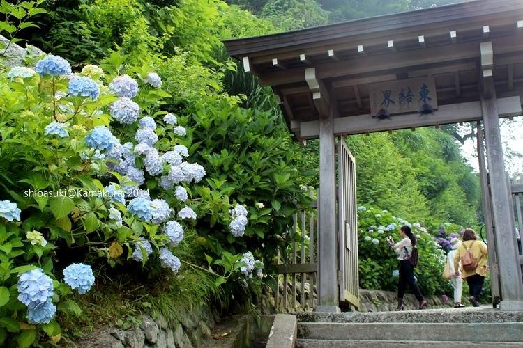 20140617_Kamakura-190_成就院_1