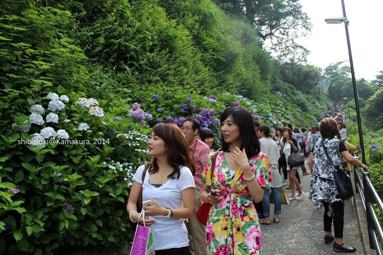 20140617_Kamakura-191_成就院_1