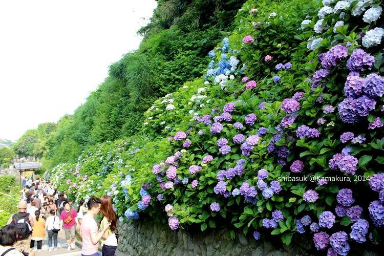 20140617_Kamakura-207_成就院_1