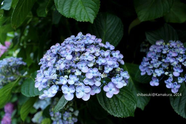 20140617_Kamakura-210_成就院_1