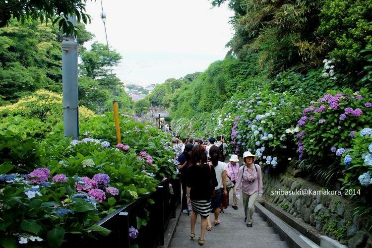 20140617_Kamakura-227_成就院_1
