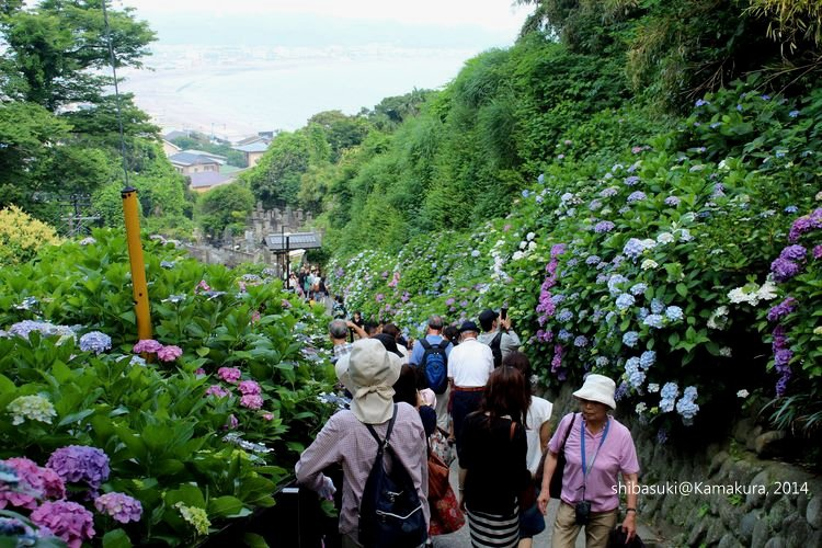20140617_Kamakura-228_成就院_1