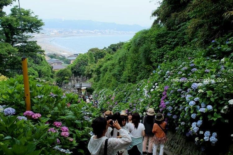 20140617_Kamakura-232_成就院_1