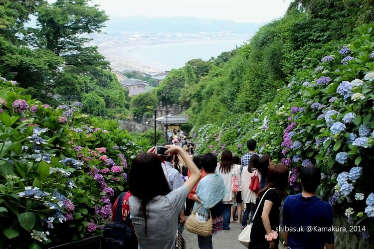20140617_Kamakura-234_成就院_1