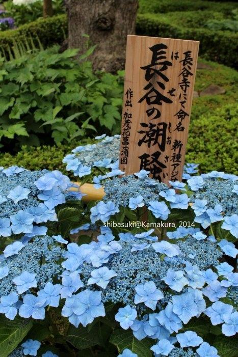 20140617_Kamakura-63_長谷寺_1