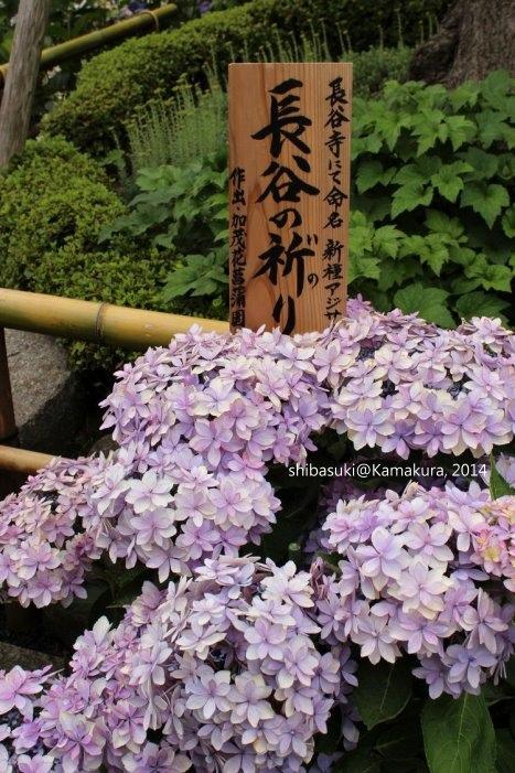 20140617_Kamakura-64_長谷寺_1