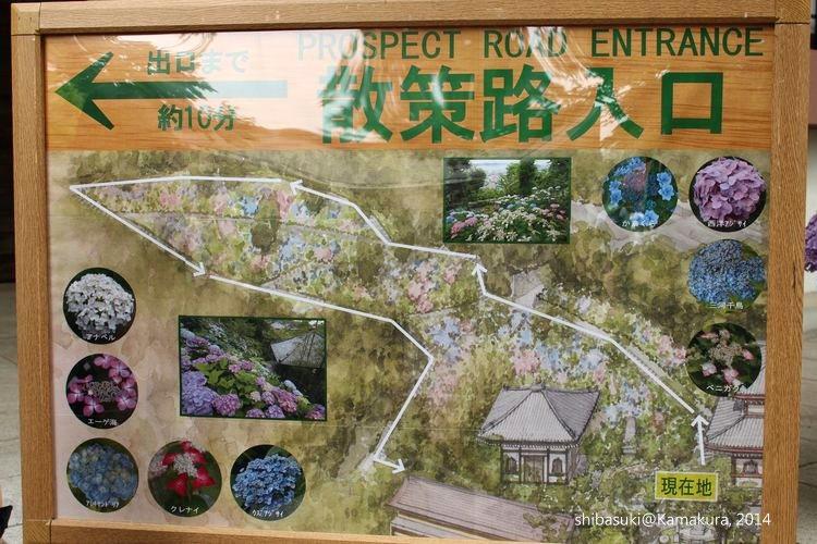 20140617_Kamakura-73_長谷寺_1
