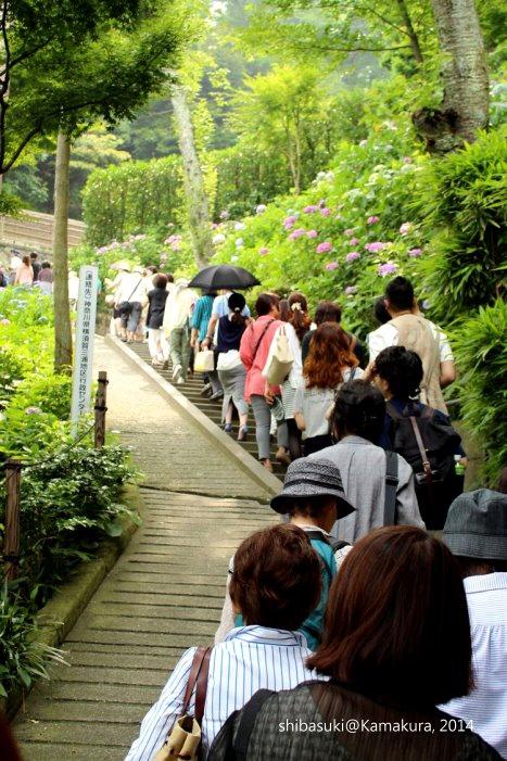 20140617_Kamakura-74_長谷寺_1