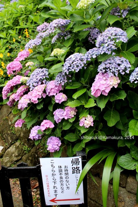 20140617_Kamakura-85_長谷寺_1