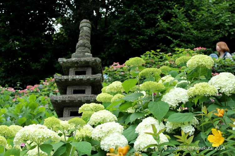 20140617_Kamakura-96_長谷寺_1