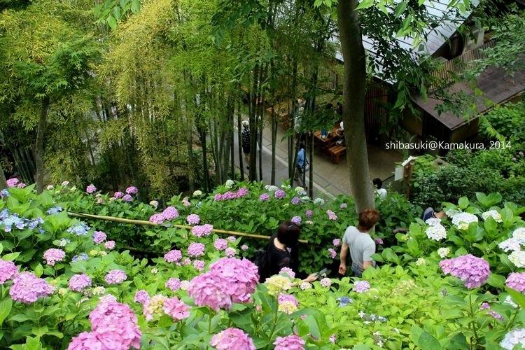 20140617_Kamakura-106_長谷寺_1