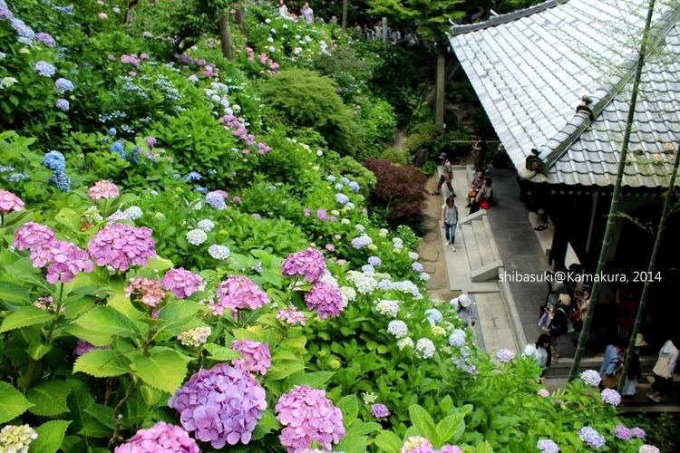 20140617_Kamakura-117_長谷寺_1