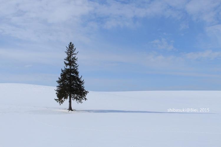20150222_美瑛-9_Chrismas tree_s2.JPG
