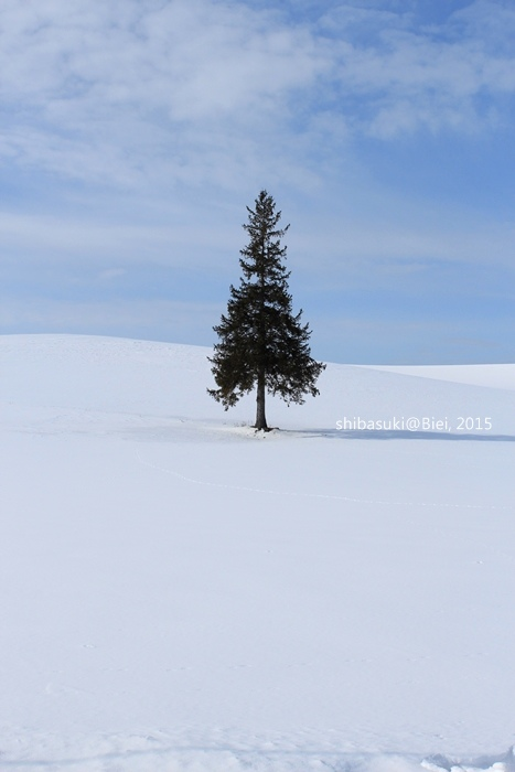 20150222_美瑛-10_Chrismas tree_s2.JPG