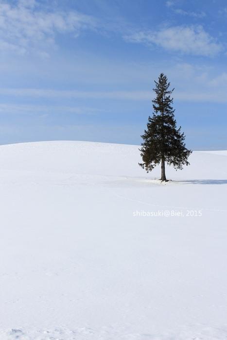 20150222_美瑛-32_Chrismas tree_s2.JPG
