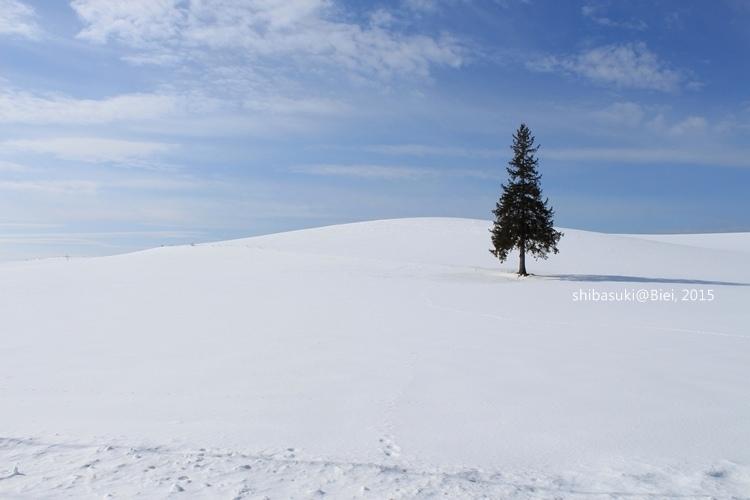 20150222_美瑛-37_Chrismas tree_s2.JPG