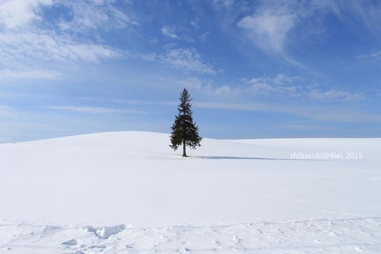 20150222_美瑛-41_Chrismas tree_s2.JPG