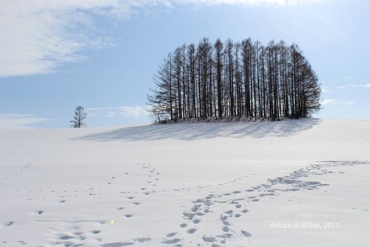 20150222_美瑛-248_Mild Seven Hills_s2.JPG