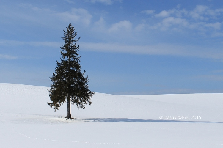 20150222_美瑛-42_Chrismas tree_s2