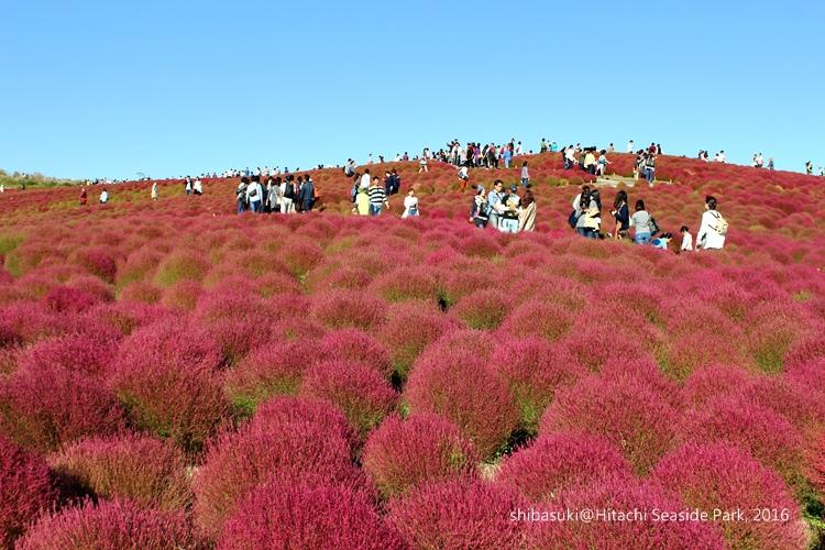 20161015_茨城-177_常陸海濱公園_s.JPG