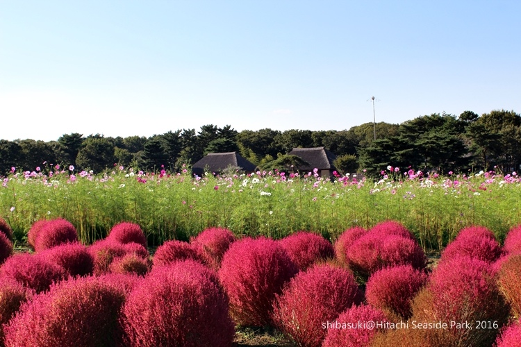 20161015_茨城-187_常陸海濱公園_s.JPG