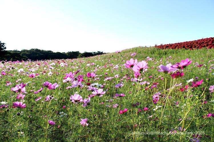 20161015_茨城-229_常陸海濱公園_s.JPG