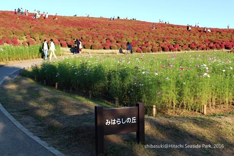 20161015_茨城-240_常陸海濱公園_s.JPG