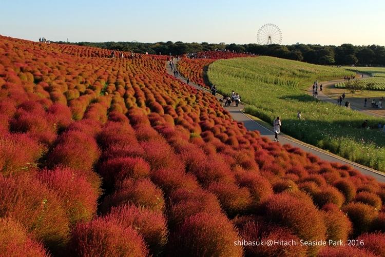 20161015_茨城-243_常陸海濱公園s.JPG