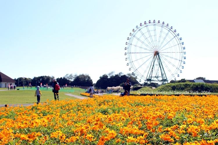 20161015_茨城-69_常陸海濱公園_s